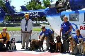 SAR K-9 Rescue Team